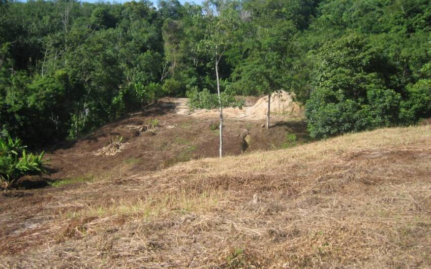 Chalong Hillside Land Plot of 14.6 Rai on Big Buddha Mountain